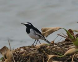Amazing Bird around Bangalore