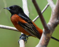 Bird around Bangalore resorts