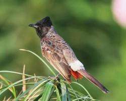 Bird around Bangalore