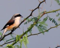 Bird Near to Mysore