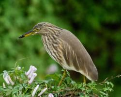 Birds around Bangalore
