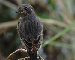 Bird Around Mysore