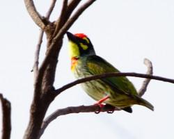 Bird near Mysore