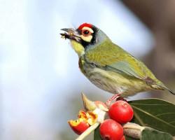 Bird near resorts
