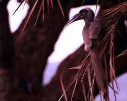 Bird near resorts at Bangalore