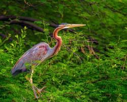 Bird photography near Shivanasamudra