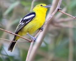 Bird photography around Banaglore