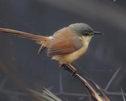Bird photography around Hebbal lake