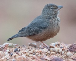 Bird photography around Mysore