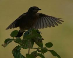 Bird photography around Nandi hills