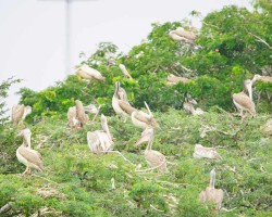 Bird Photography at River Kaveri