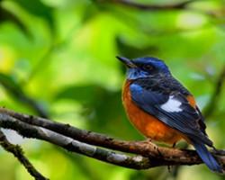 Bird photography at Chukkimane