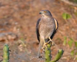 Bird photography near Bangalore