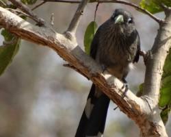 Bird photography near Talakadu
