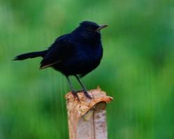 Bird photography tours Bangalore