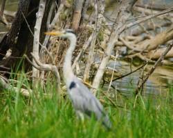 Bird Sanctuary Visit Near chukkimane