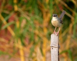 Birds around ChukkiMane Resort