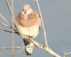 Birds around Chukkimane