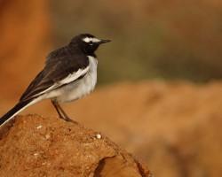 Birds around Mandya