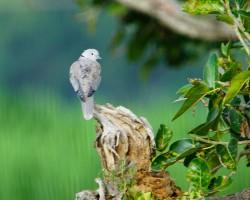 Birds around Shivannasamudra