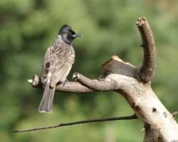 Birds Around Ranganathittu