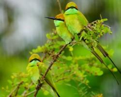 Birds around Ranganathittu bird sanctury