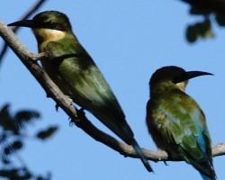 Birds around Talakadu