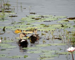 Birds at Chukki Mane