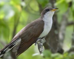 Birds in their natural habitat