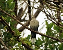Birds near Bangalore Resorts