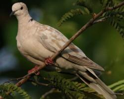 Birds near Somanatha temple