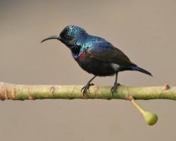Birds photos near Chukkimane