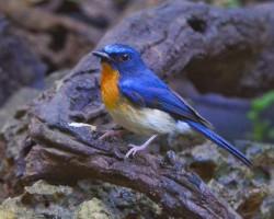 Birds photos at Chukki Mane