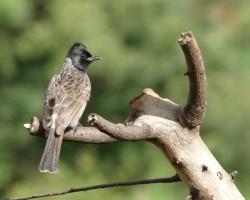 Birds photograph around Bangalore