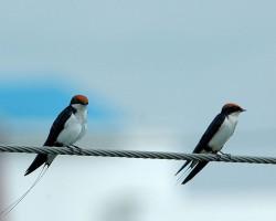 birds at Chukkimane
