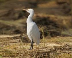Birdwatching near Chukkimane