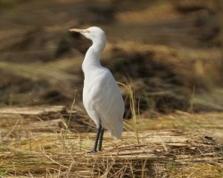 Bird watching in Bangalore