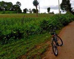 Cycling around farmlands