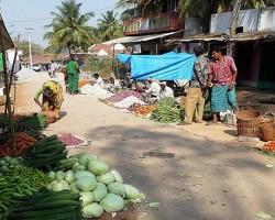 Fresh organic vegetables grown in farmyard in Javanagahalli village