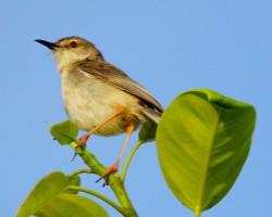 Birds around Mysore