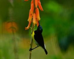 Holi birds near resorts