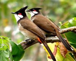 Bird Photography near Chukkimane