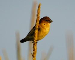 Birds In and around Chukkimane