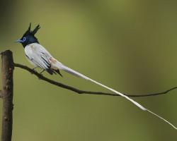 Birds in and around Karnataka