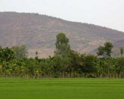 Paddy fields landscape photography