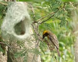 Bird at Chukkimane