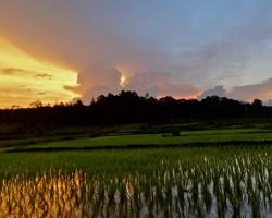 Sunset photography around farm fields