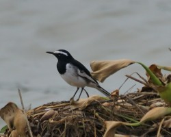 Water bird Photography near Bangalore