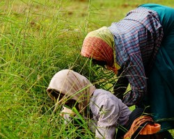 Women working in the farm, support agriculture