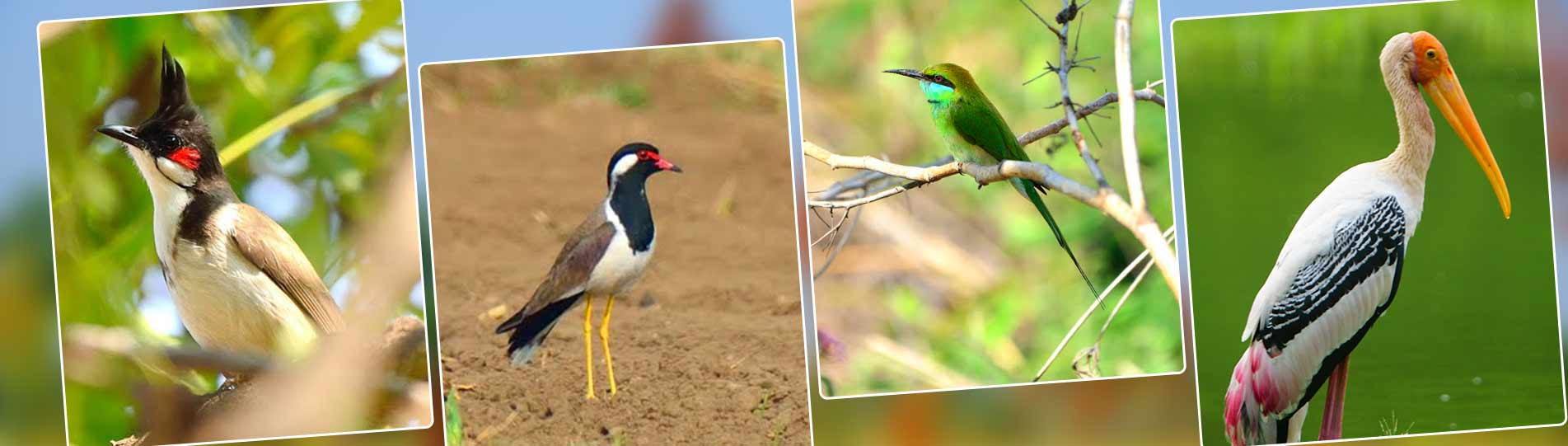 Birds near Bangalore